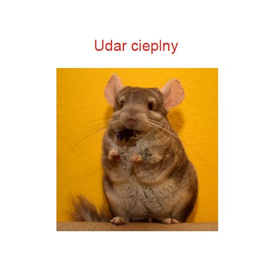 Udar2m